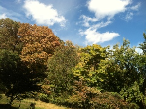 Fall Colours at Fort Tryon Park